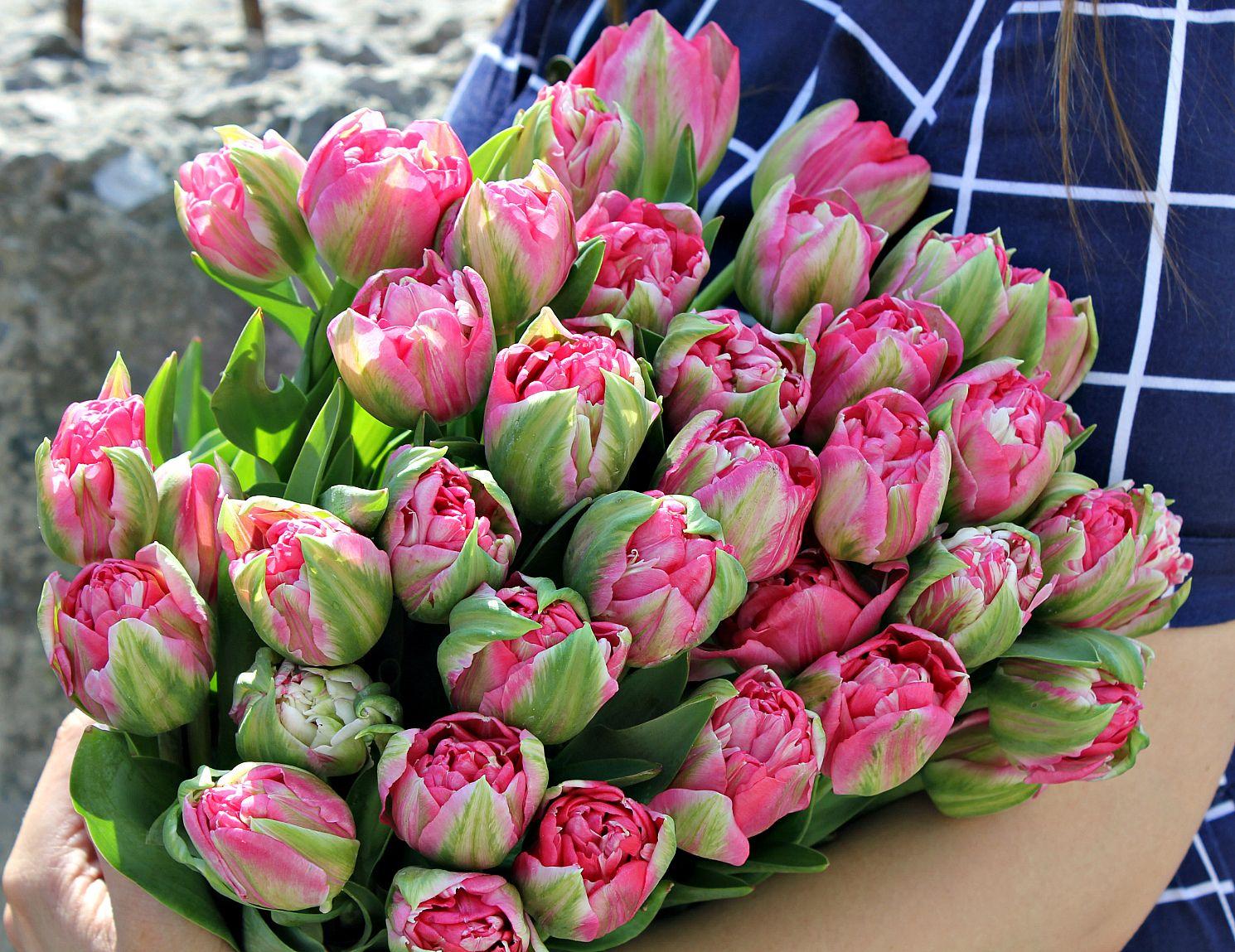 Тюльпаны пионовидные купить харьков самоцветы купить квартиру
