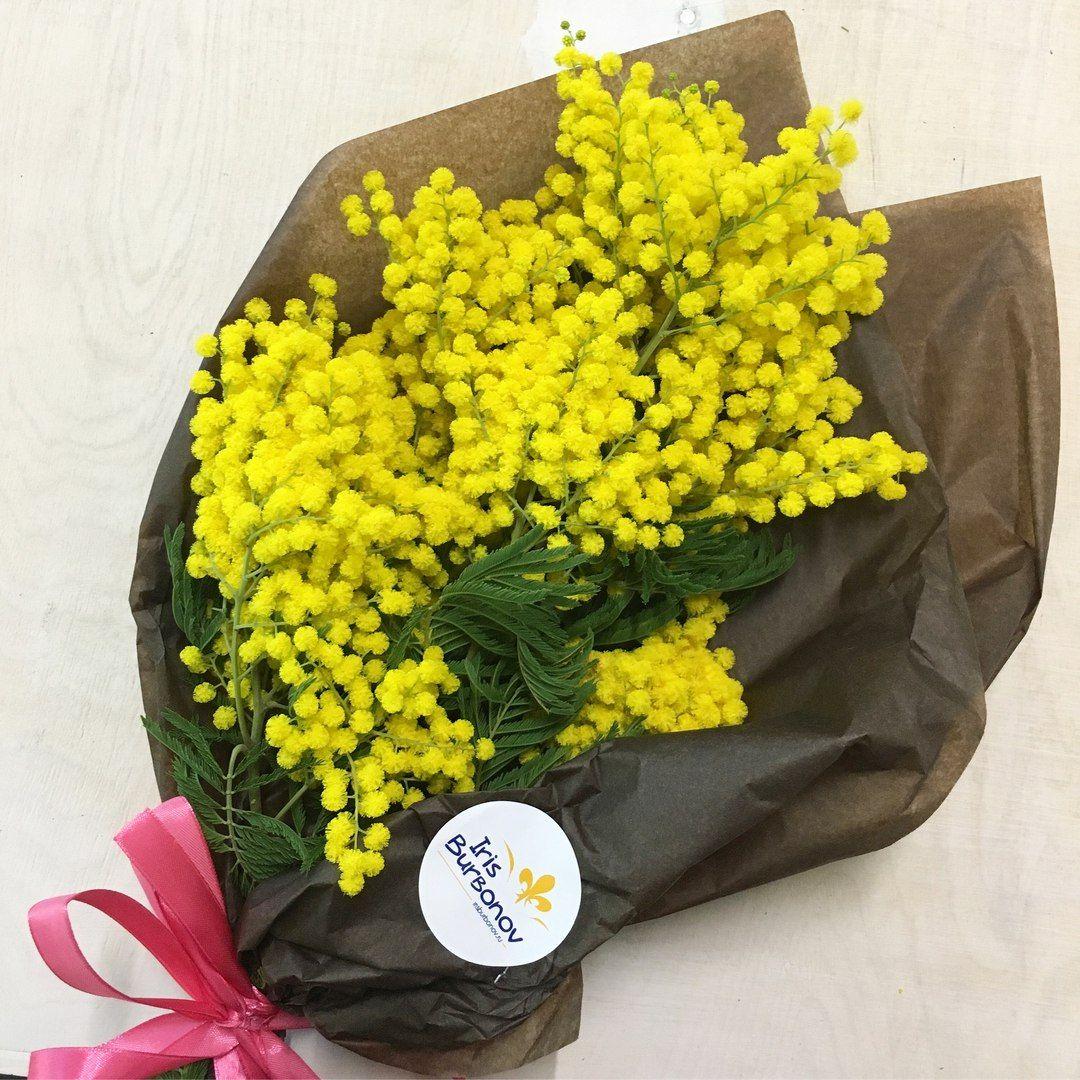 Доставка омск, цветы мимоза в красноярск купить минск