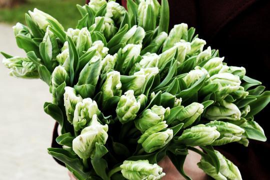 49 пионовидных тюльпанов цена