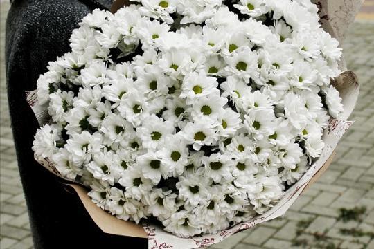 ромашковые хризантемы цена