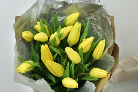 Тюльпаны картинки