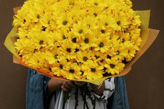 желтые хризантемы недорого