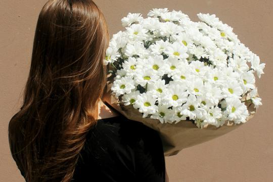 25 хризантем недорого