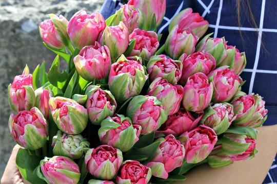 Тюльпаны цена