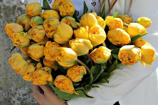 Большой тюльпан