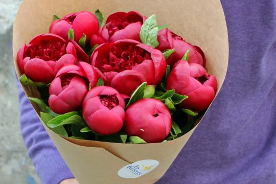 Розово красные пионы
